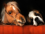 Cute Pony And Saint Bernard.