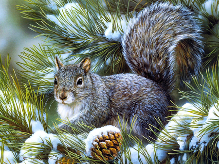 Sweet winter squirrel - squirrel, christmas, pine, snow, nature, animal, winter