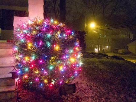 Christmas Bush Lights.Christmas Lights Photography Abstract Background