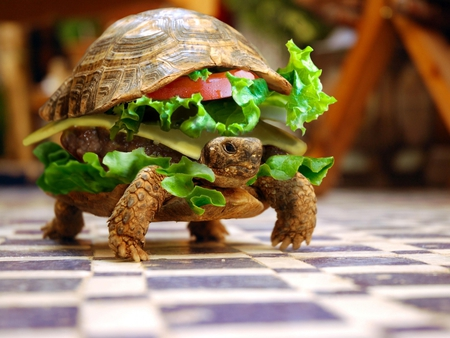 delicious lunch!! - tomato, food, turtle, hamburger, sandwich, square, cheese, meat, chair