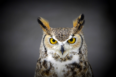 Pretty Owl - beautiful, gray, brown, white, owl, cute, eyes, yellow