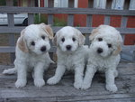 Curious puppies posing for the photo