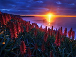 Shore glow