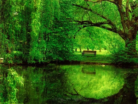 綠油油草林,難得的綠!  Photography 攝影特區