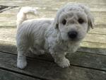Handsome little boy puppy