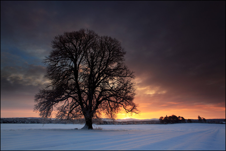 Winter sunrise - image, sun, background, beautiful, sky, clouds, winter, cold, tree, gold, snow, nature, sunrise, morning, frozen, landscape