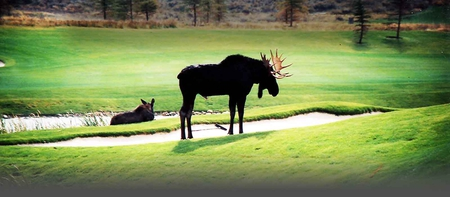 Moose on the green - fun, moose, other, people