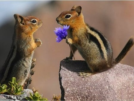 Will You Marry Me Rodents Animals Background Wallpapers On