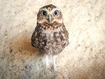 meet birdie