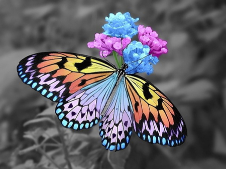 Color butterfly in black and white collage design flowers black animal