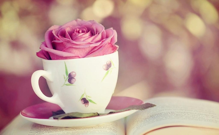 Beautiful story - lovely, rose, leave, book, beautiful, cute, pink rose, love story, cup, flower, plate, beauty, story, page