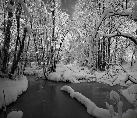 Winter - image, view, background, silence, black, trees, winter, cold, snow, beauty, nature, river, white, frozen, landscape