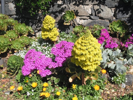 Colour in nature - rocks, succulents, yellow, leaves, green, flower, garden, colour, blooms, white, pink