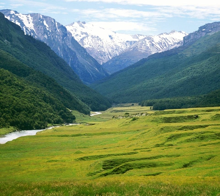 View Along Dart River - hills, dart river, view, grass, new zealand, flats, cattle, mountains, nature, river, scenery, scene