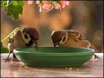 Thirsty birds.