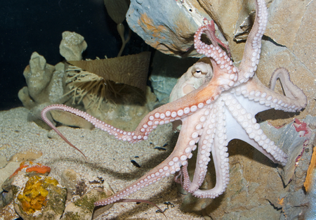 Octopus - underwater, oceans, octopus, ocean, nature
