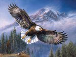 By James Meger * Bald eagle