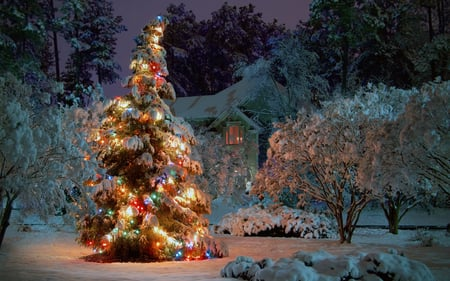 Christmas Tree at Night - christmas, christmas tree, tree, nature, beauty, beautiful, snow, winter, snowflakes, lights, christmas lights, house, night