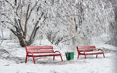 Winter - beauty, lovely, snow, winter time, pretty, bench, red, beautiful, trees, benches, nature, peaceful, winter, snowy, view, splendor, tree