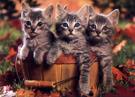 Autumn Cats Cats Animals Background Wallpapers On Desktop Nexus
