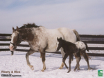 horses in the winter