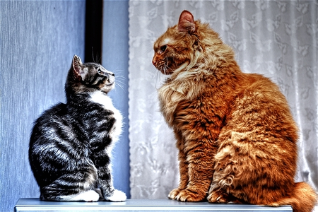 The Weigh In - stare, small, cute, big, focused, mighty, funny, duel, cats