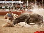Stupid vs Bull