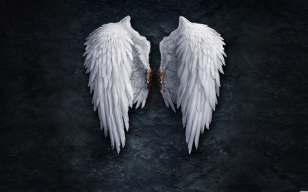 Angel wings - wings, stone, angel, white wings, blood