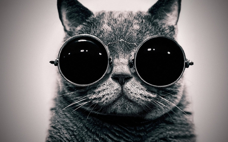 Cool Cat Cats Animals Background Wallpapers On Desktop Nexus