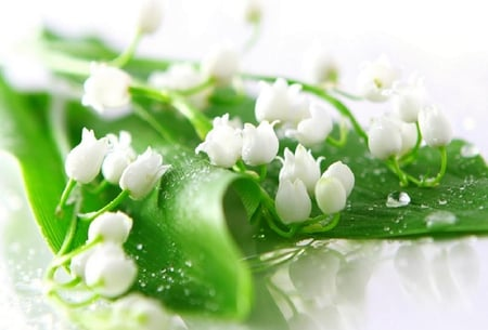 White Flowers In Green Leaves Flowers Nature Background