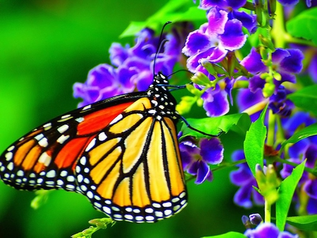 Bright Butterfly And Purple Flowers