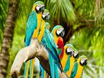 parrots_on_tree-wide