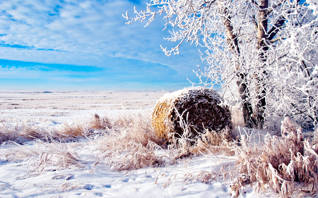 Winter Time - grass, peaceful, winter time, blue sky, tree, winter, sky, splendor, cold, nature, trees, frozen, beauty, beautiful, lovely, snow, clouds, field, view