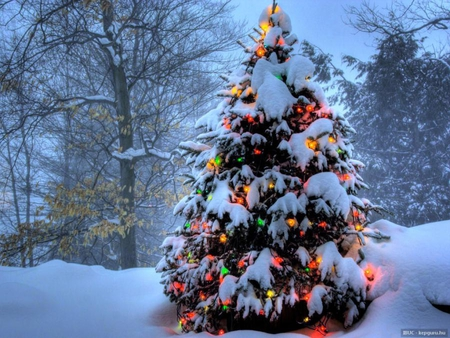 Beautiful christmas tree forests nature background - Christmas nature wallpaper ...