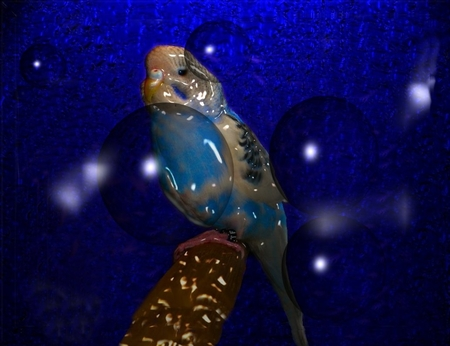 Parakeet in Glass - glass, stars, photography, birds, sky, parakeets
