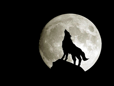 Wolf - Full Moon - image, rock, bats, space, incredible, shape, nice, new moon, wallpaper, fast, fairy, super, collage, winter, howls, moonlight, wolf, white, movie, black and white, howl, beautiful, moon, other, gorgeous, animals, night, mmm, forest, fun, dark, drawing, nature, wolves, stunning, full, fantasy, gothic, dog, lobo, widescreen, black, abstract, silhouette, cute, cool, awesome, great, wow, howling, dogs, dreamy, twilight, animal, picture, loup, eclipse, full moon, darkness, wild, hot, light, amazing, dark art, romantic, fantastic, mysterious, alone, 3d, myst, wildlife, collages, creature
