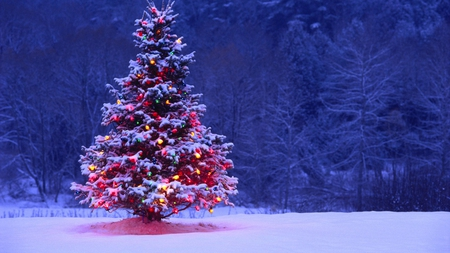 Beautiful Christmas Tree - Photography & Abstract Background ...