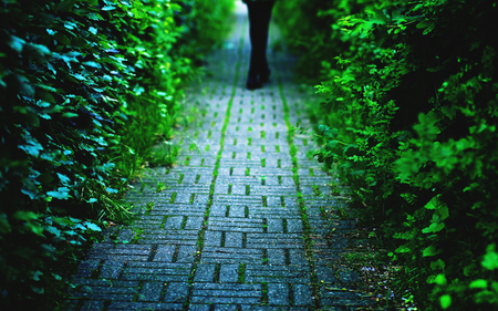 Green in the Shadow - image, background, quietness, nice, multicolor, wallpaper, landscapes, path, paisage, half-light, quiet, sidewalk, garden, beautiful, cold, leaves, parks, green, way, pavement, paving, banquette, silence, fresh, peace, wall, causeway, paisagem, dark, nature, desktop, branches, pc, architecture, cenario, calm, pathway, shadows, vision, forests, roadway, widescreen, cena, black, trees, bund, half-shade, cool, serenity, awesome, computer, fence, colorful, gray, trunks, picture, trail, coldness, grove, road, amazing, calmness, multi-coloured, view, place, colors, spring, freshness, leaf, serene, peaceful, colours, natural