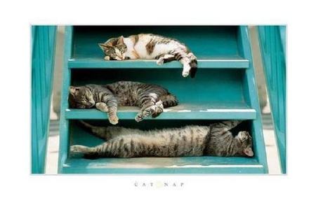 Cat nap. - nap, stair, cat, animal