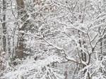 Winter of 2010