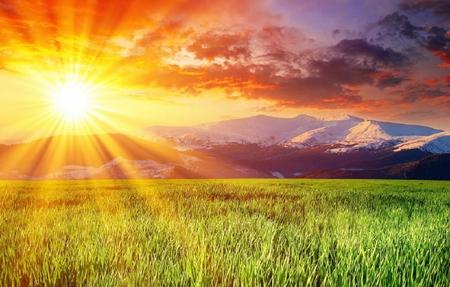 Beautiful sun ray - Grass & Nature Background Wallpapers ...