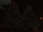 Barrie's lighted trees