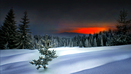 Winter Sunset - sunset, trees, sky, clouds, winter, snow, mountains, nature, landscape