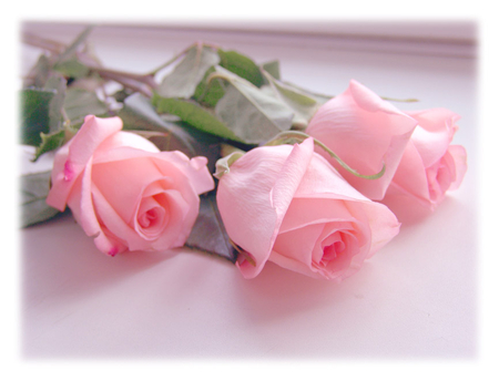 Pink Roses For You Flowers Nature Background Wallpapers On