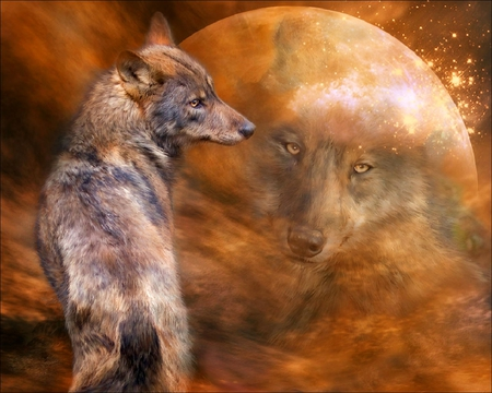 Wolf Wallpaper Collages Abstract Background Wallpapers On