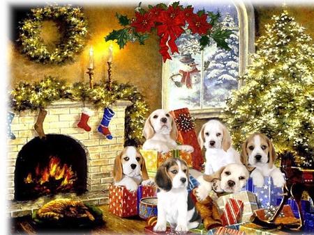 happy new year my friends in dn