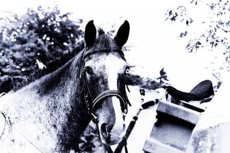 Horse in blue filter - jumping, black and white, black, horse, riding, animal, tree, and, jpg, nature, colour, white, equitation, blue