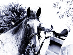 Horse in blue filter