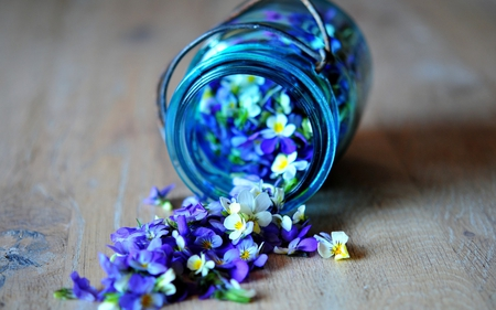 Delicate purple flowers photography abstract background delicate purple flowers blue flowers purple white flower jar mightylinksfo
