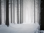 solitary winter forest